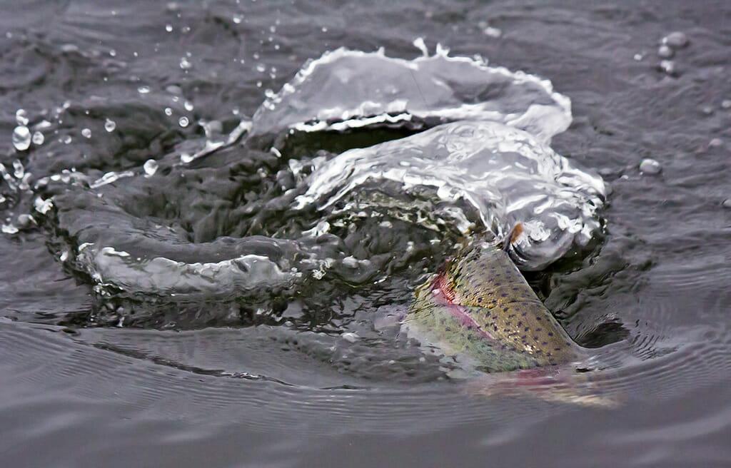 Pesca Alla Trota Pesca Alla Trota Iridea
